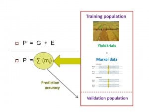 Genomewide selection training pop