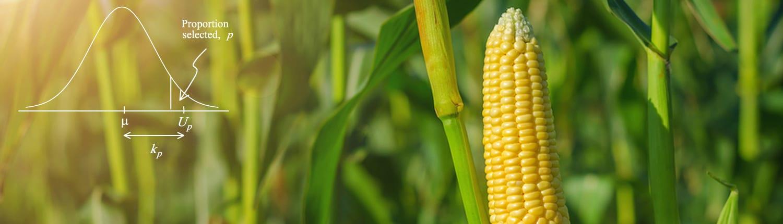 corn-cob-bell-curve-1500x430